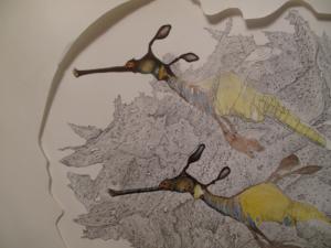 Wild Weedy Seadragons