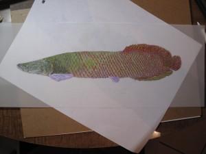 Fish ID: Arapaima