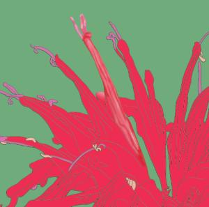 Scarlet Pollinators
