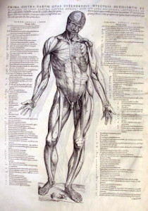 Andreas Vesalius, Father of Modern Anatomy