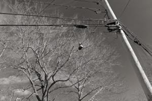 Photos of Maplewood, N.J.