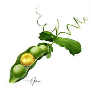 botanical illustration, scientific illustration, natural science, plant, pea, logo