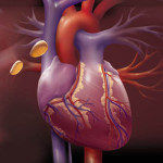 Elaine Kurie, medical illustration, medical illustrator, cardiology, heart, medical art, illustration, healthcare
