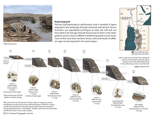 fossils in kenya essay Date: august 8, 2012 source: national geographic society summary: exciting  new fossils discovered east of lake turkana confirm that there were two.