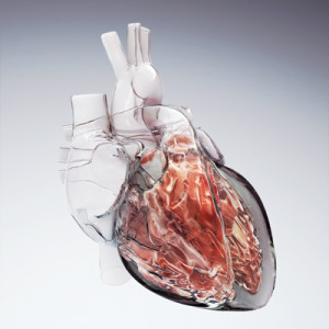 Hybrid Medical Animation, medical illustration, medical illustrator, cardiology, heart, medical art, illustration, healthcare