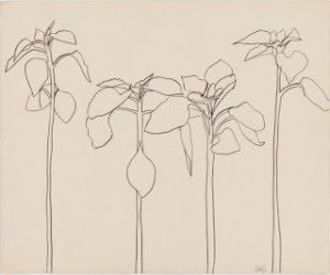 "Ellsworth Kelly's ""Plant Drawings"" exhibition"