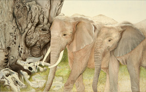 sharon birzer, elephant, african elephant, natural science, zoology, scientific illustration, illustration
