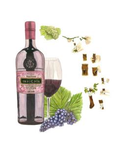 botanical illustration, scientific illustration, natural science, plant, wine, wine illustration, stephanie rozzo, vino