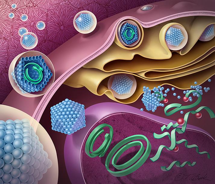medical illustrator, medical illustration, todd buck, todd buck illustration, hepatitis, disease, virus, medical art, scientific illustration