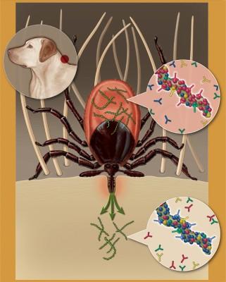markmmiller-caninevaccine