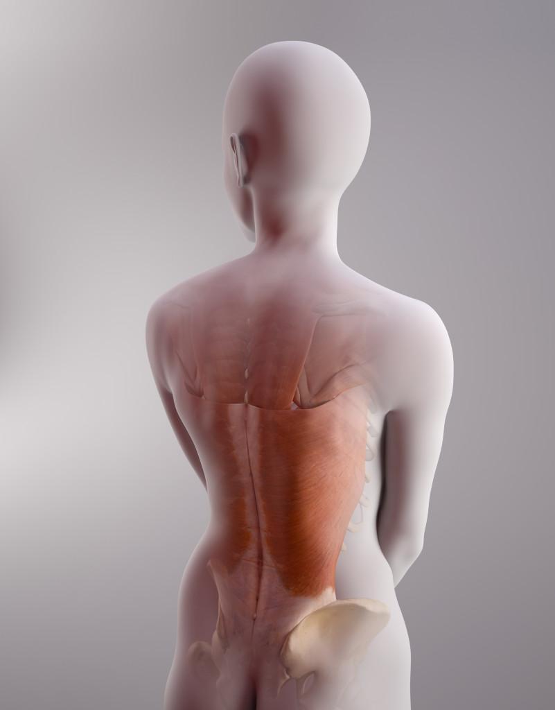 scientific illustration, medical illustration, spine