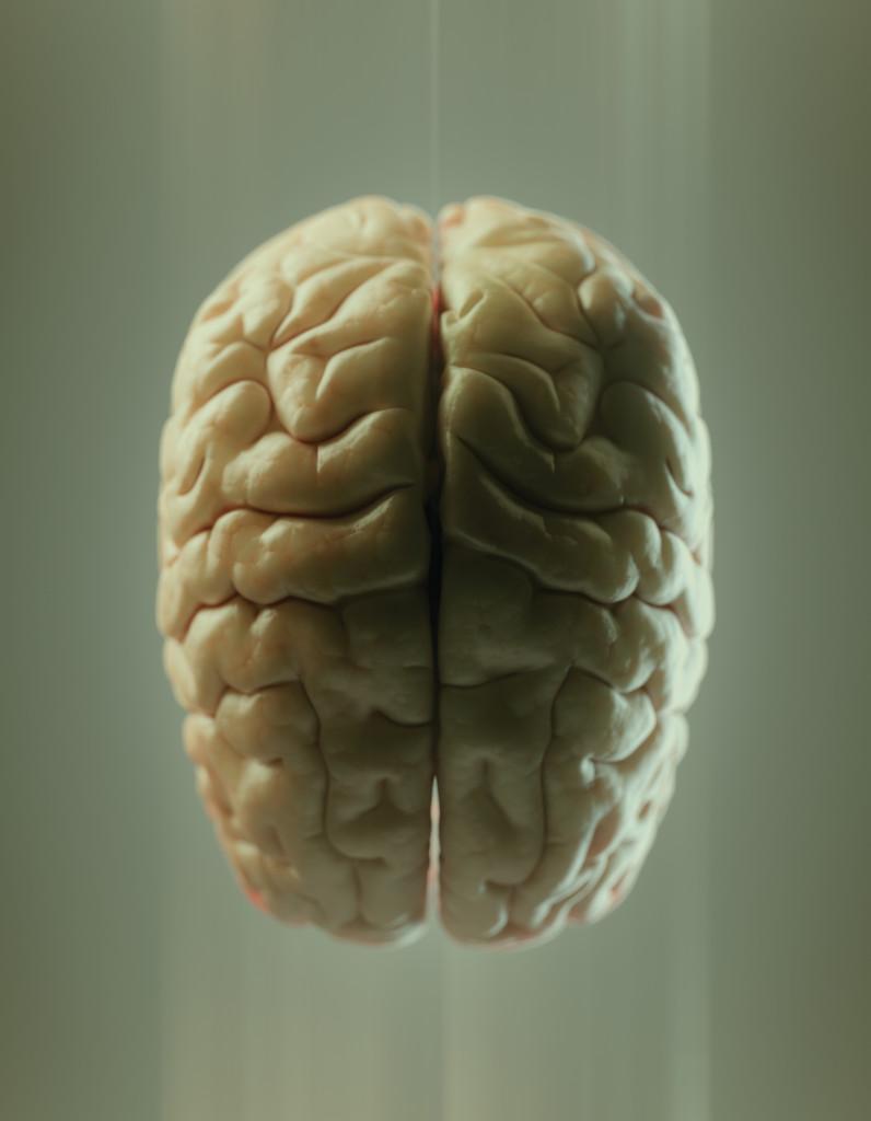 scientific illustration, anatomy blue, brain illustration, medical illustration, james archer