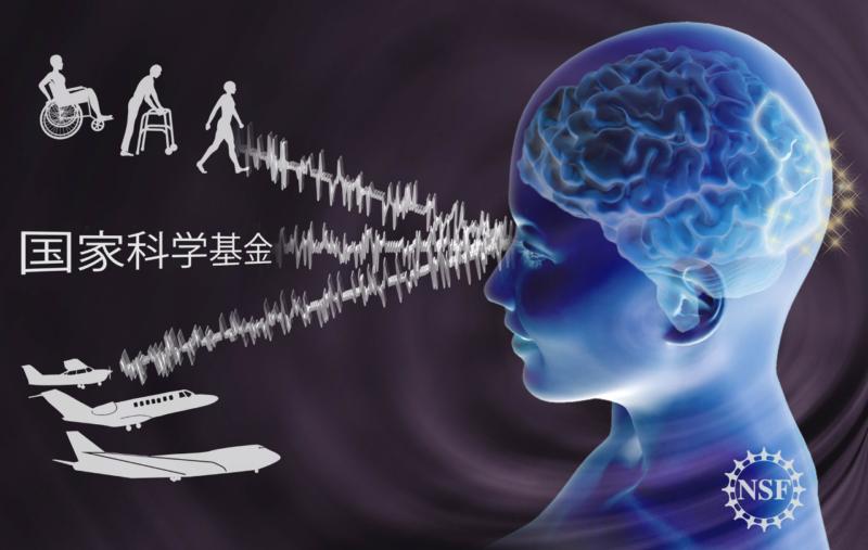 Nicolle Fuller - Neurology Learning Illustration
