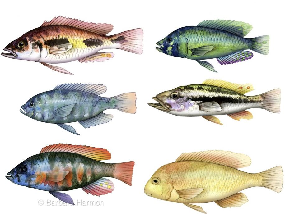 Barbara Harmon Fish