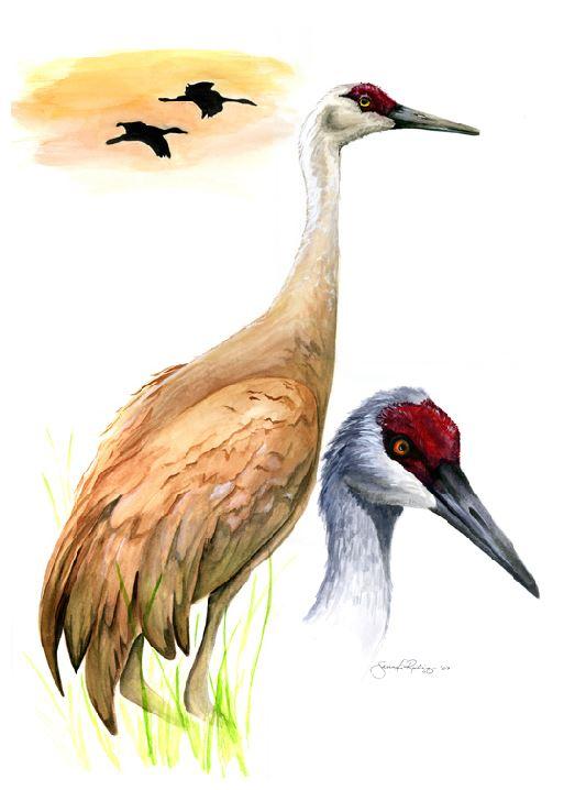 Jennifer Gockowski- birds