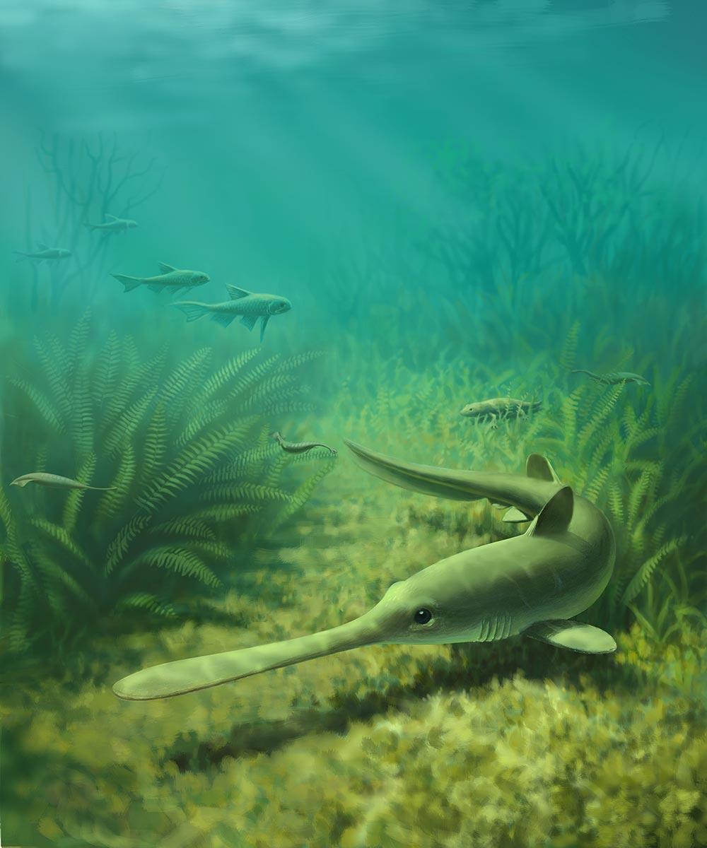 John Megahan- Shark