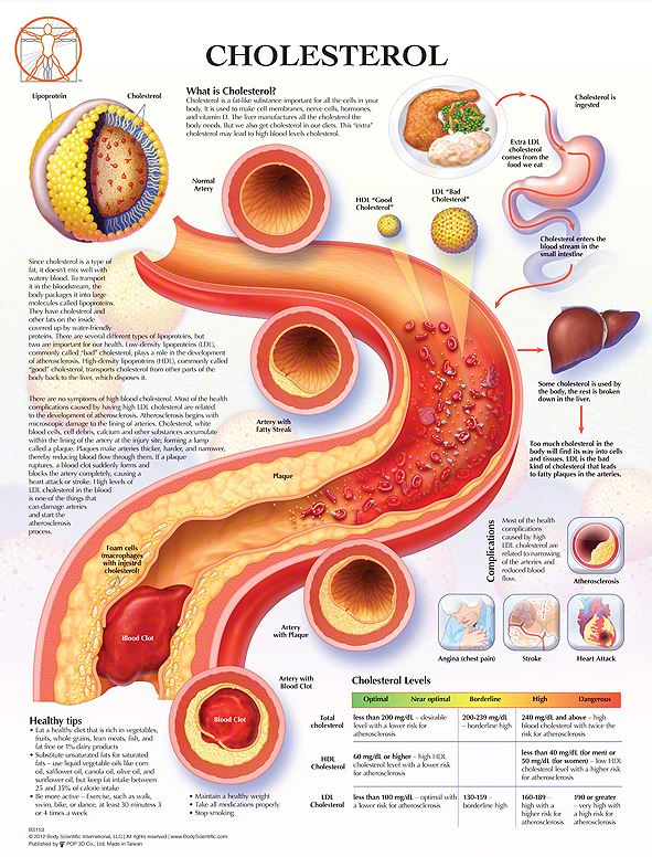 Body Scientific Cholesterol