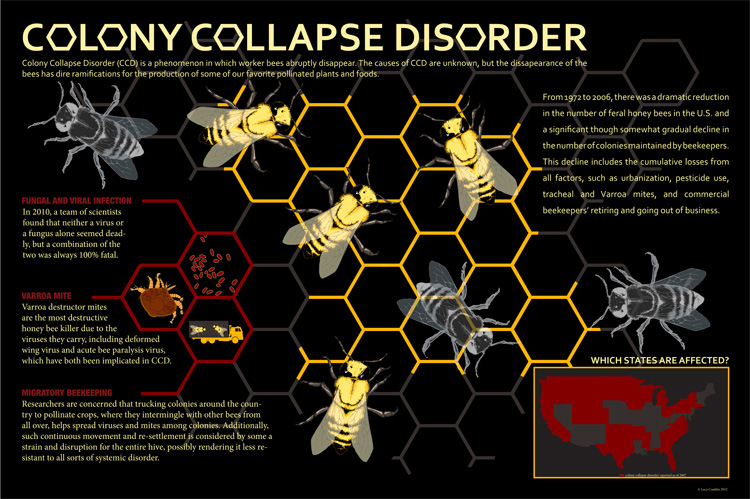 Lucy COnklin Colony collapse