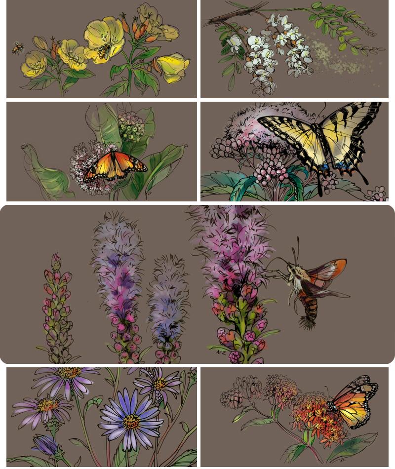 Longwood-Pollination-A_850
