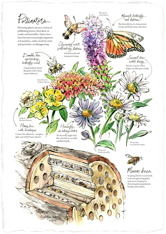 Naturalist-Notebooks-Vert