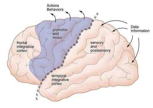 scihealth_brain