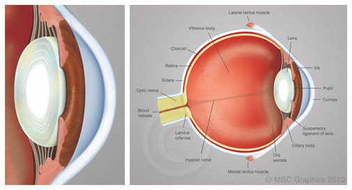 scihealth_eye