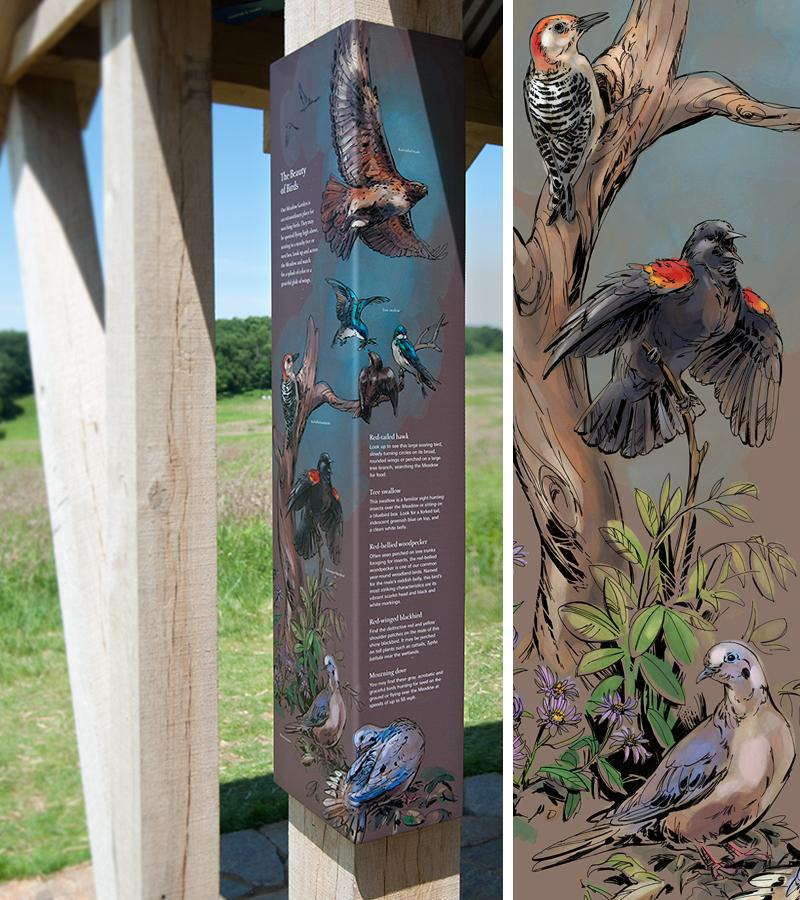 Natalya Zahn Longwood-Birds