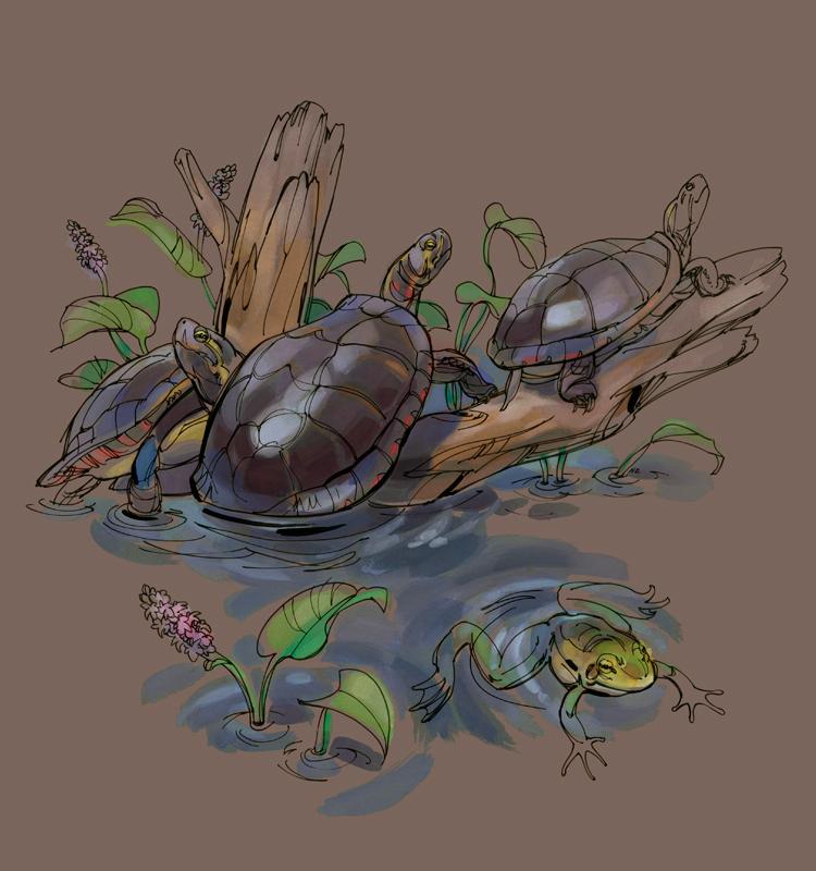 Natalya Zahn Longwood Meadow Turtles