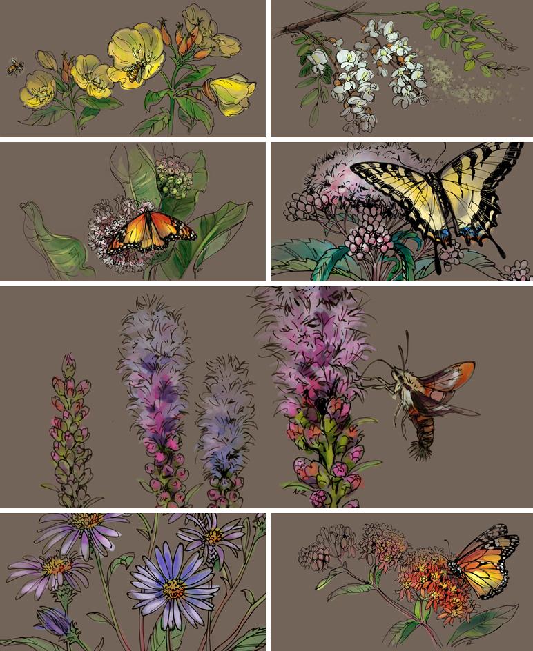 Natalya Zahn Longwood-Pollinators-1