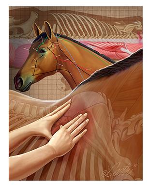 Alternative Horse Medicine
