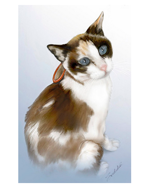 Esophagogastric tube in cats
