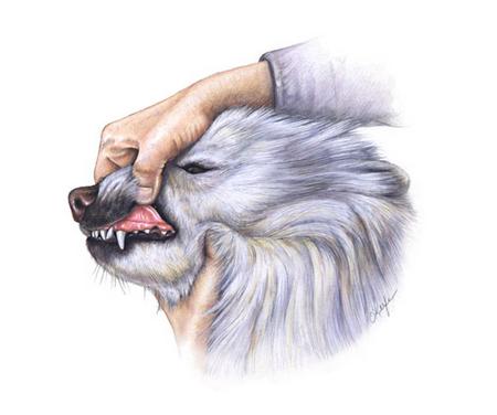 Healthy dog gums