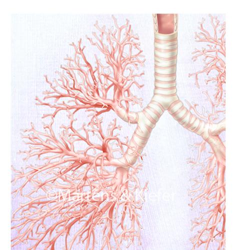 Respiratory System Martens & Kiefer