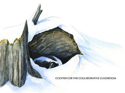 Skunk Asleep, Guth Illustration, Center For The Collaborative Classrom