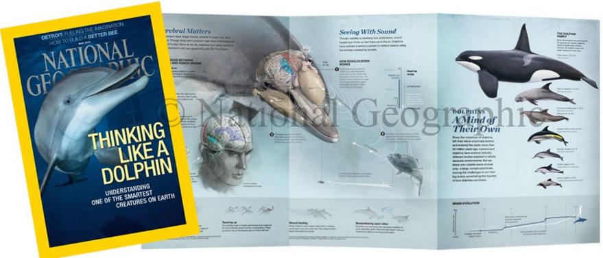 Anatomize Medical Media