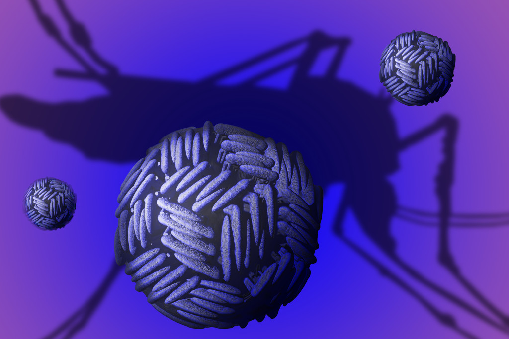 Zika virus. Zika virus (ZIKV) is a member of the Flaviviridae virus family and the Flavivirus genus. It is spread by mosquitos and causes a mild disease called zika fever in humans.
