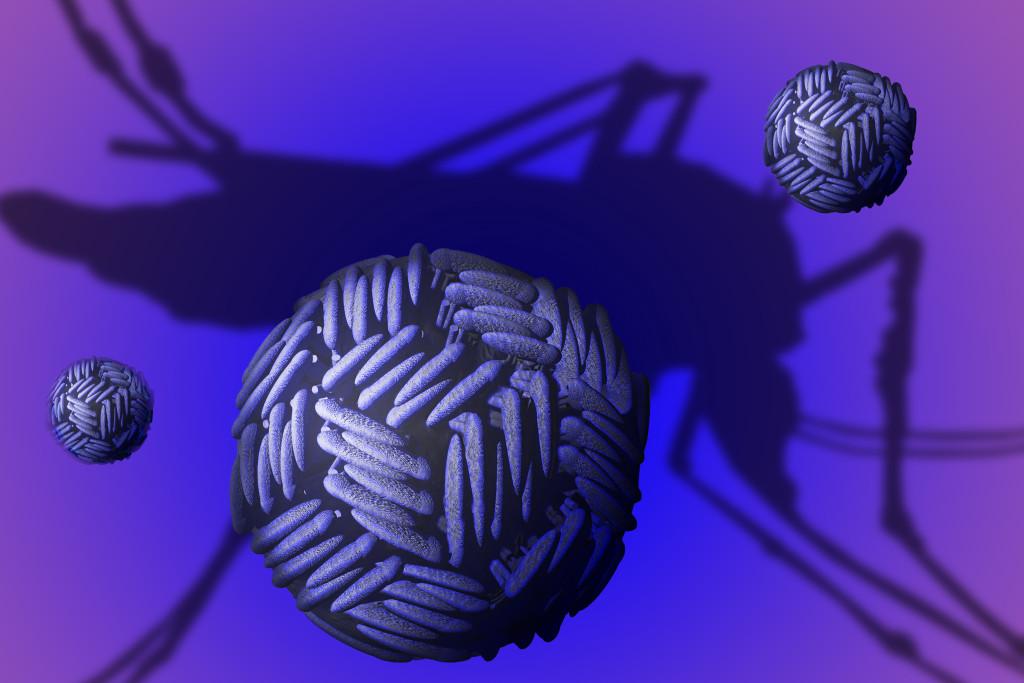 Zika virus. Zika virus (ZIKV) is a member of the Flaviviridae virus family and the Flavivirus genus. It is spread by mosquitos and causes a mild disease called zika fever in humans.