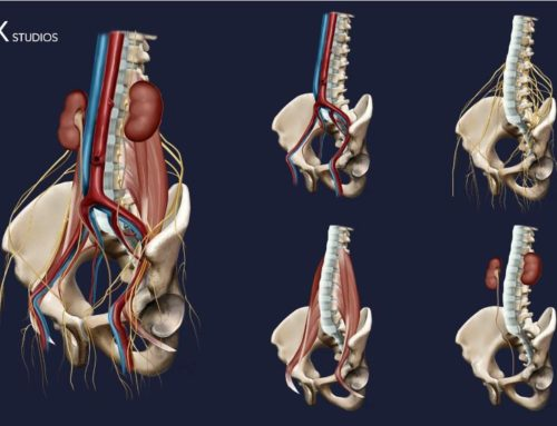 Pelvic Anatomical Series by CSIXstudios