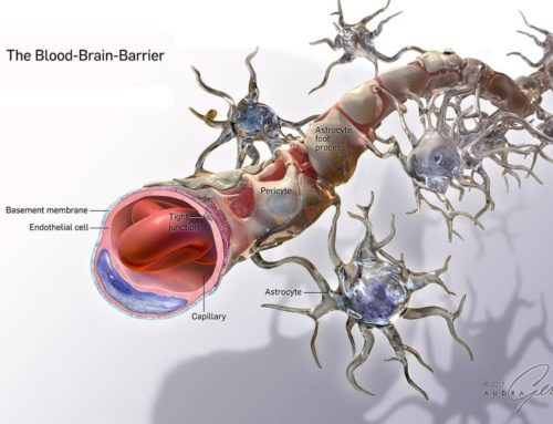 Audra Geras: The Blood Brain Barrier