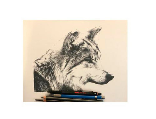 Mexican Gray Wolf Mexican Gray Wolf – Ink and graphite on…