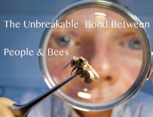 The Unbreakable Bond Between People & Bees