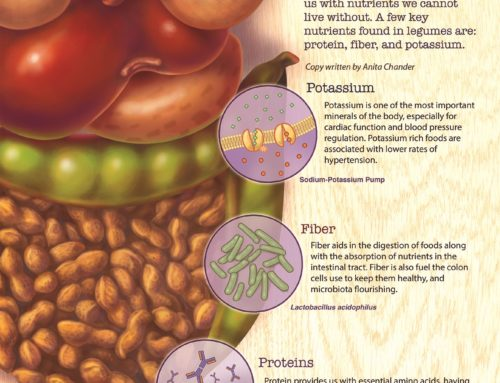 Nutritional Benefits of Legumes – C. Wheeler Studios