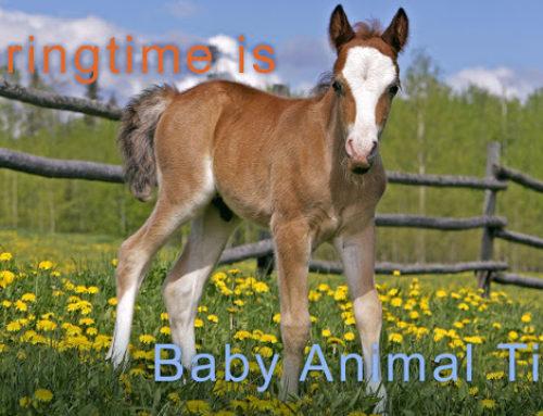 Springtime is Baby Animal Time