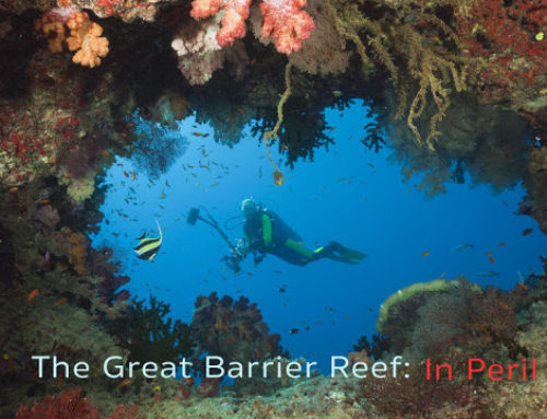 The Great Barrier Reef In Peril