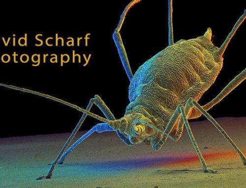 David Scharf Scanning Electron Microscopy