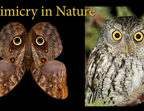 Animal Mimicry and Camouflage