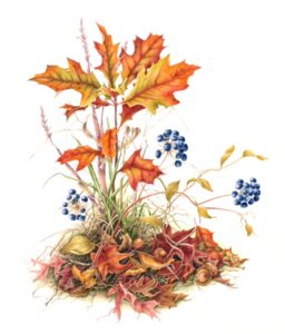 Take a Class in Botanical Illustration!