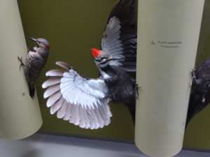 Drawing Birds in the Peabody Bird Hall