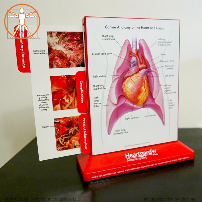 body scientific heartworm disease