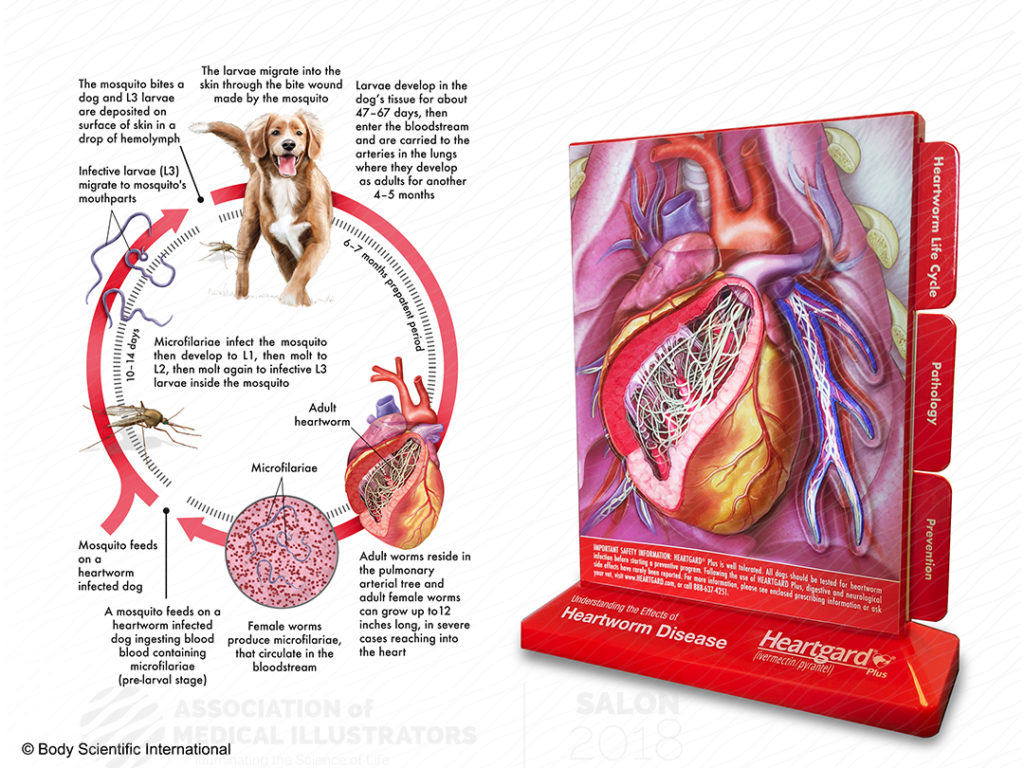 body scientific heartworm disease